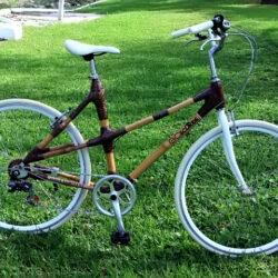 Female Bikes