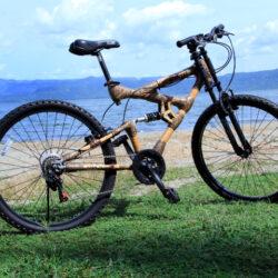 Male Bikes